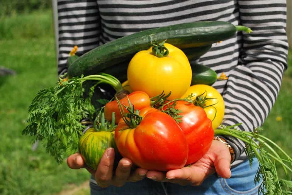 Vychutnávajte si aj vy čerstvé doma vypestované potraviny