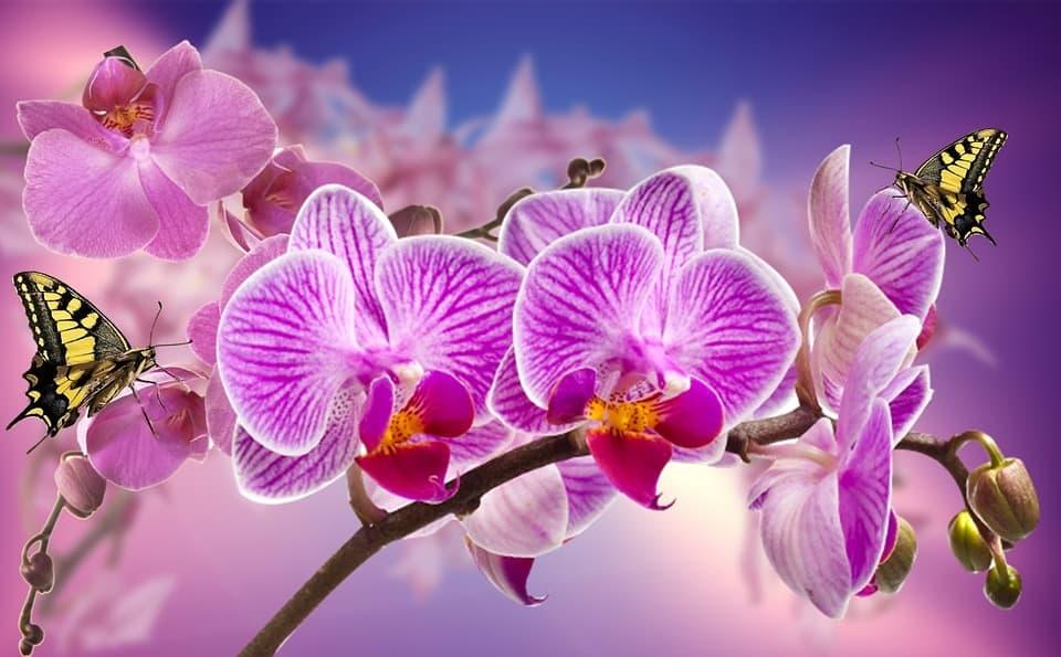 Príbeh orchideí