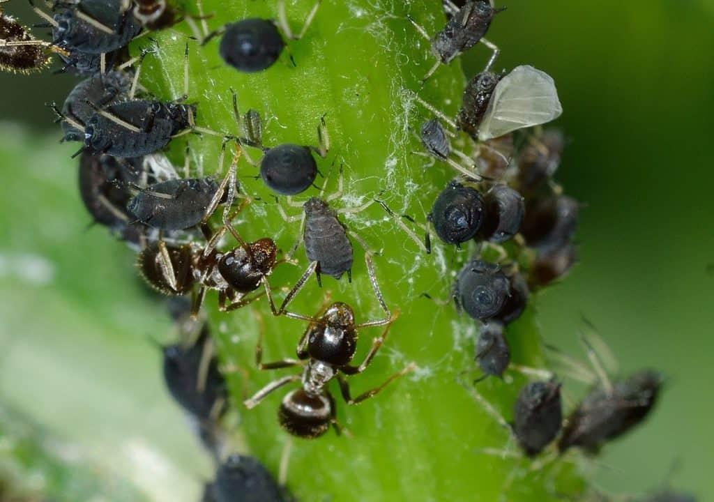 Najčastejší škodcovia na izbových rastlinách