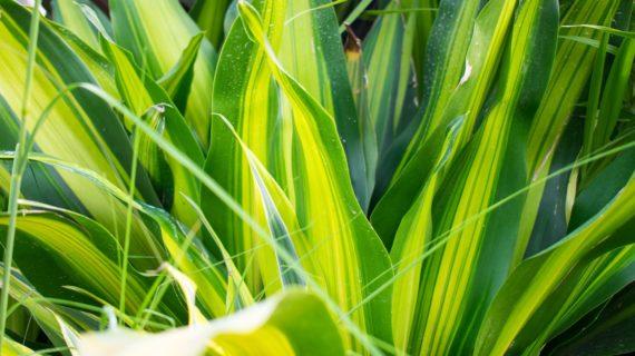 Izbová palma v zime vyžaduje zvýšenú starostlivosť