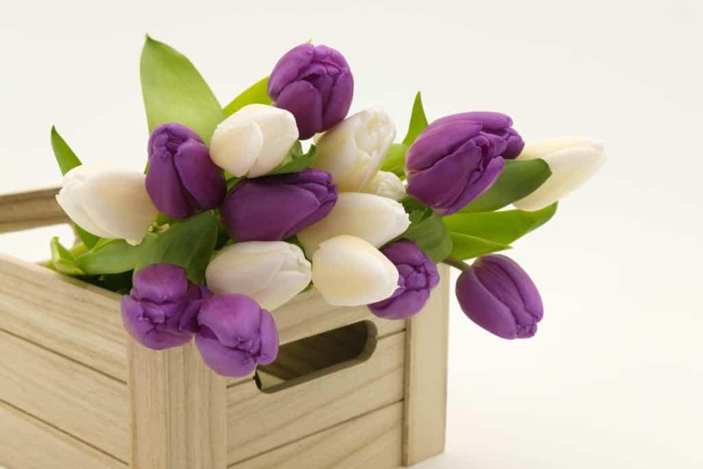 Kytica tulipánov - jarné dekorácie, ktoré oživia váš interiér