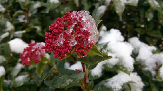 Dreviny v zime