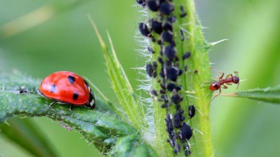 Poraďte si so škodcami na izbových rastlinách