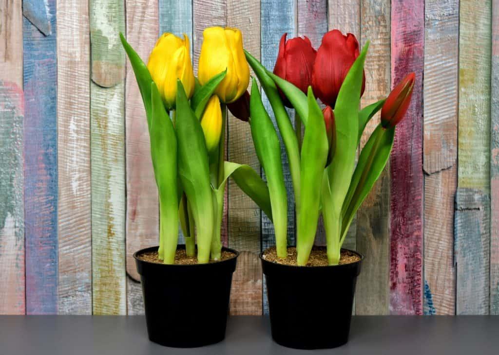 Tulipány ako prírodné jarné dekorácie
