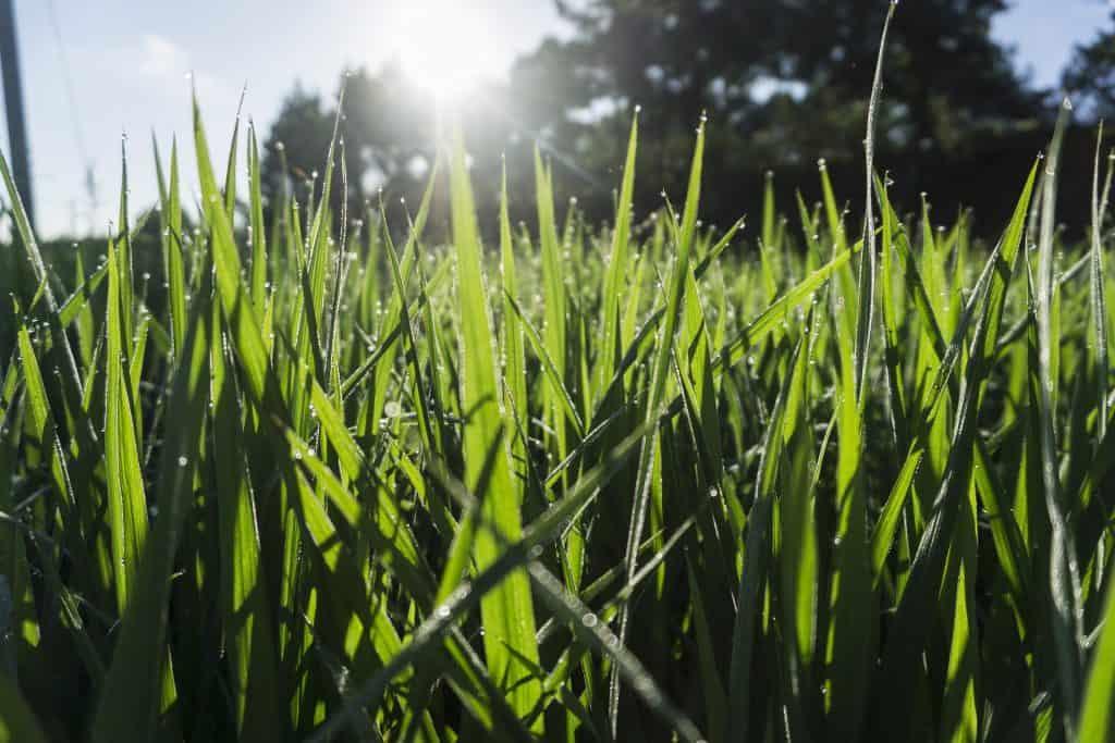 Zelený trávnik - starostlivosť o trávnik