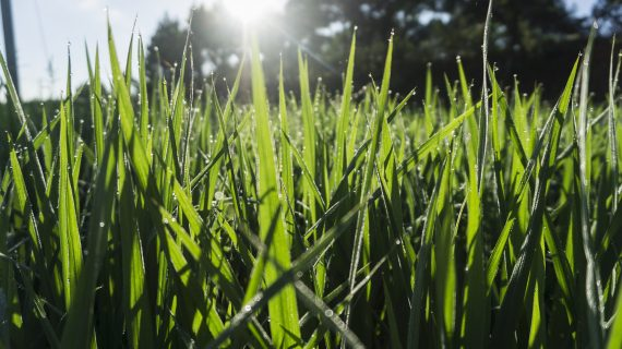 Jarná starostlivosť o trávnik