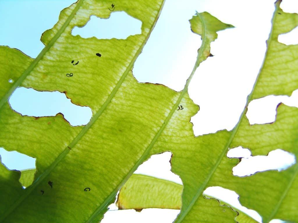 Reč tela u rastlín – kedy hlásia nevyhovujúce podmienky