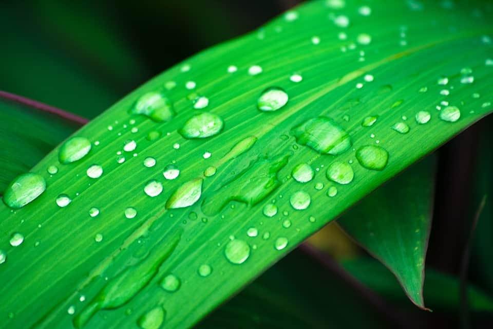 Listy tejto rastliny pripomínajú trávu