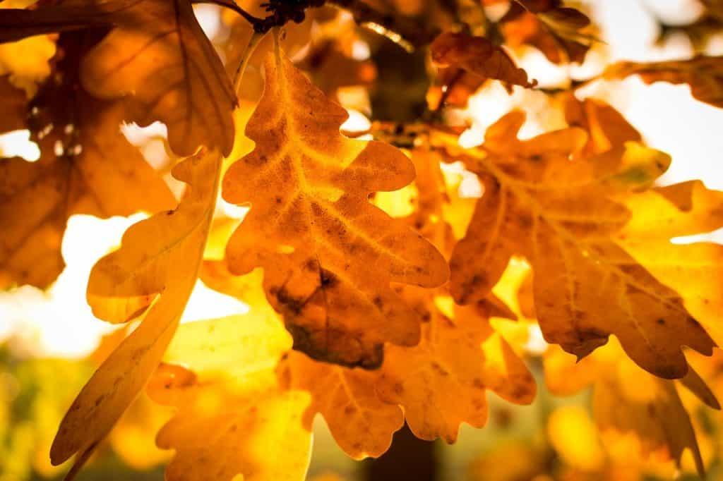 Pripravte sa na jeseň a zútulnite si svoju spálňu čo najskôr