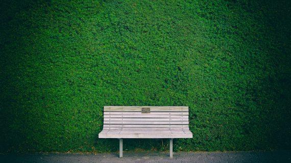 4 pekné ihličnany, ktoré zvýraznia váš živý plot
