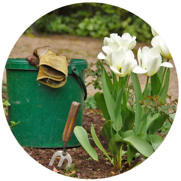 Harmonogram májových prác v záhradke