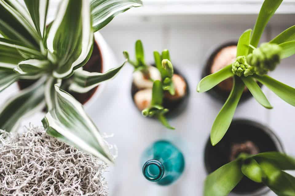 izbove rastliny filtruju skodliviny z ovzdusia