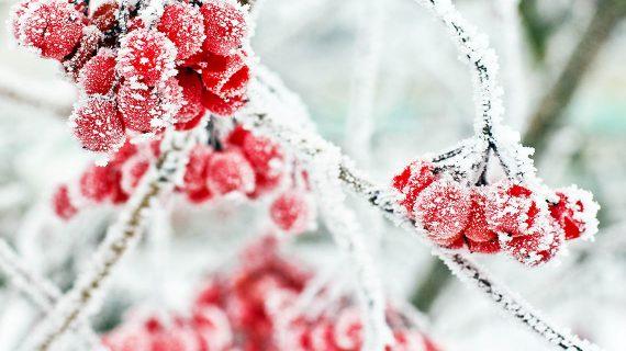 december v zahrade