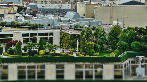 Zelené strechy v meste