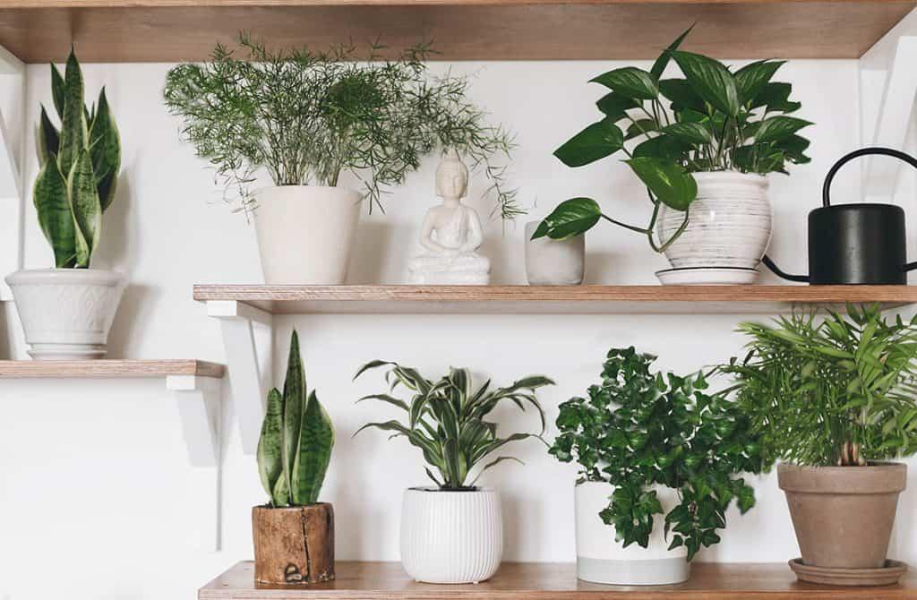 Jedovaté izbové rastliny