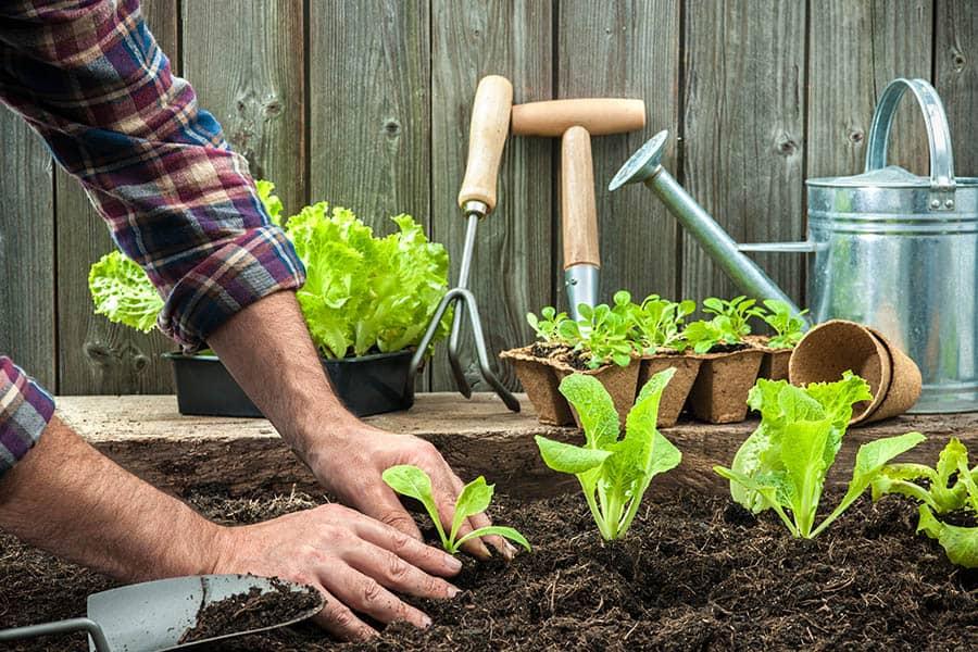 Sadenie zeleniny vo vyvýšených záhonoch