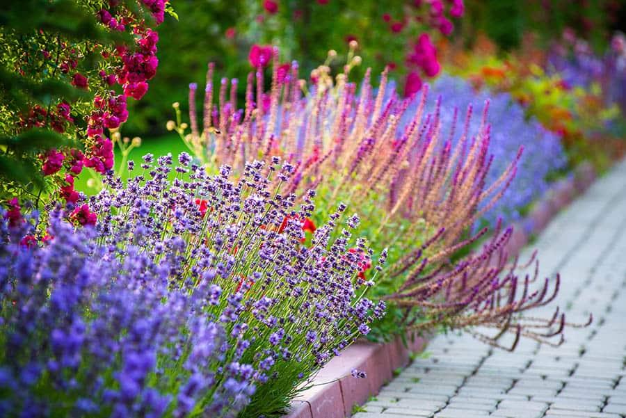 Záhon v kvetov záhrade