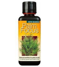 Hnojivo Palm Focus