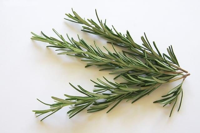 Rozmarín lekársky - liečivé bylinky