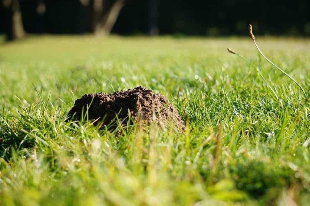 Krtinec - krtko v záhrade