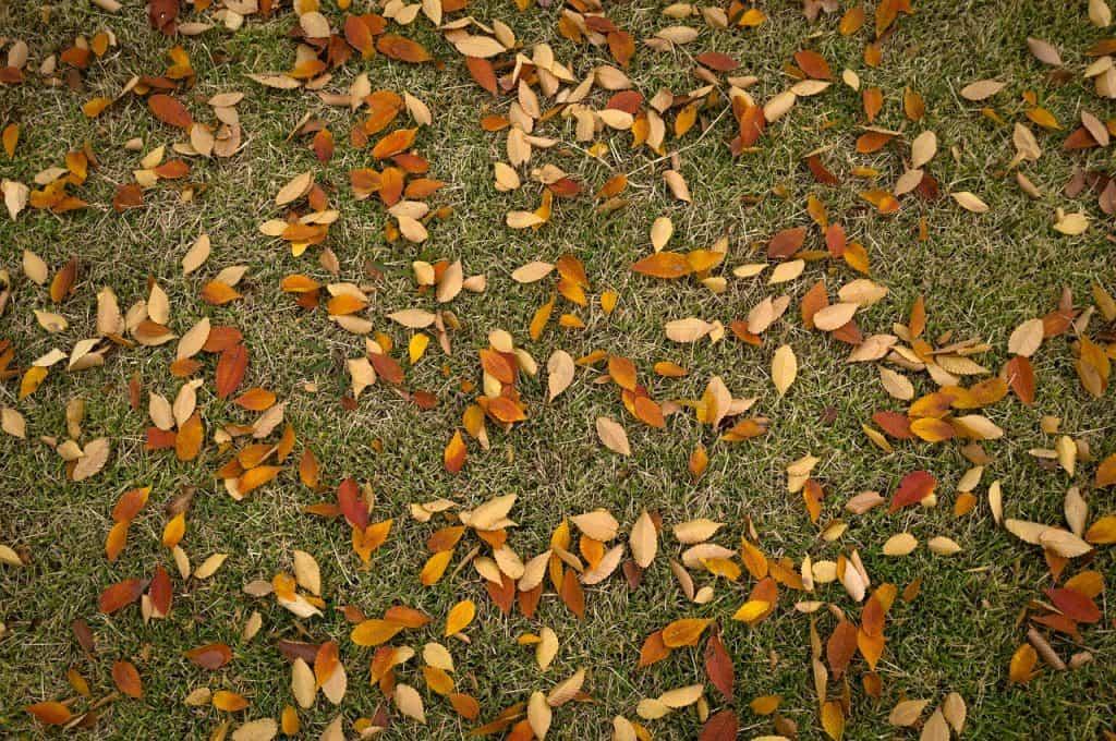 Trávnik - september v záhrade