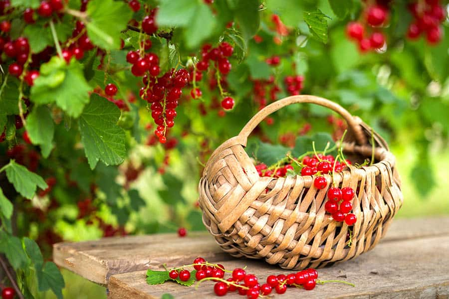 Zber úrody - permakultúrne záhrady