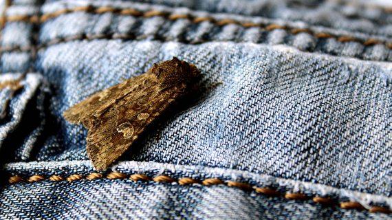 Mole v byte - mole v oblečení