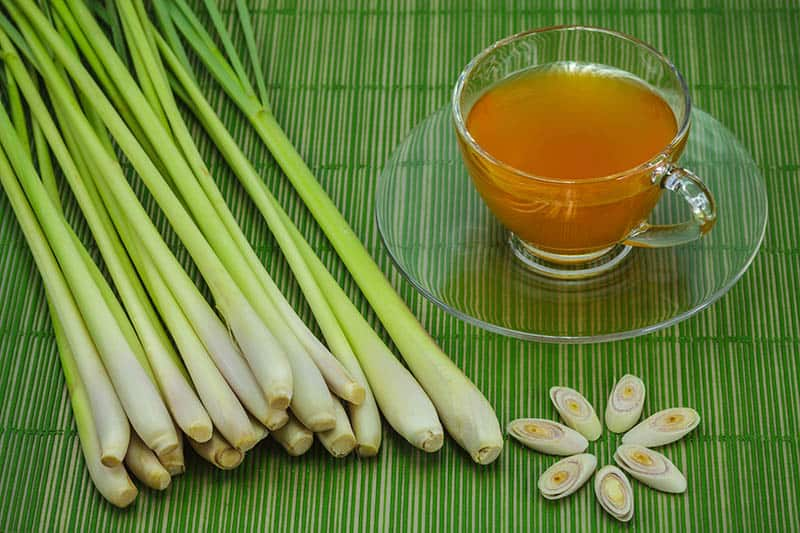 Čaj z citrónovej trávy