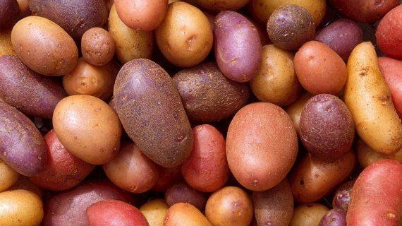 Sadenie zemiakov