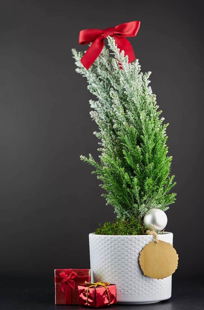 Vianočný stromček v kvetináči - ozdobený