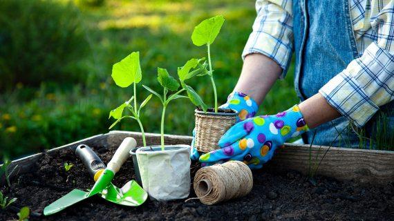 Ako pripraviť záhradu na zimu