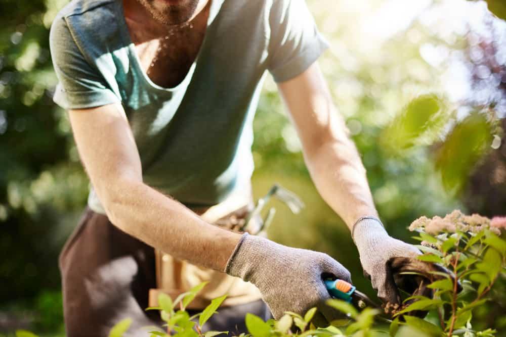 Ako odstrániť burinu v záhrade