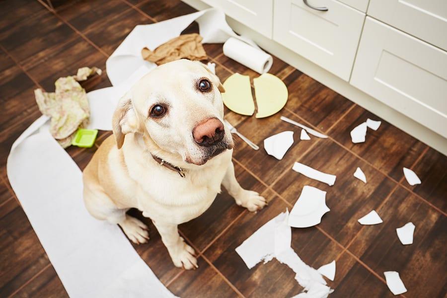 Kryje poistenie domácnosti aj škody spôsobené domácim miláčikom