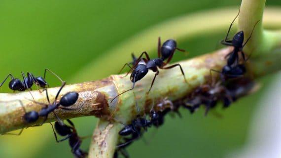 Mravce v záhrade