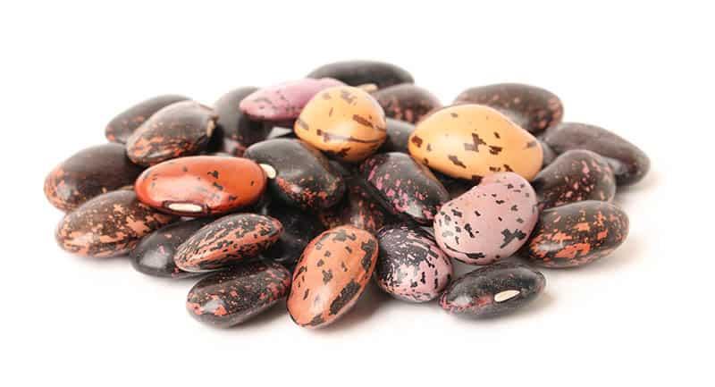 Ako sadiť fazuľu